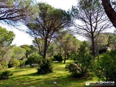 Cebreros - La Merina, Atalaya de ensueño - viajes senderismo madrid;turismo rural turismo madrid